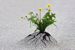 planta_roots_raiz_Cultura_Inquieta11