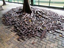 planta_roots_raiz_Cultura_Inquieta2
