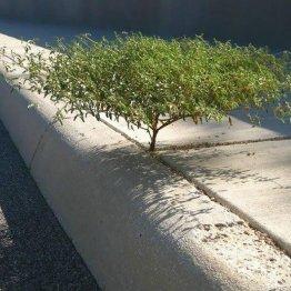 planta_roots_raiz_Cultura_Inquieta22