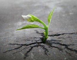 planta_roots_raiz_Cultura_Inquieta8 (1)