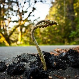 planta_roots_raiz_Cultura_Inquieta9